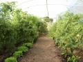 Garten3(FG)