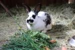 Lehrbauernhof - Kaninchen